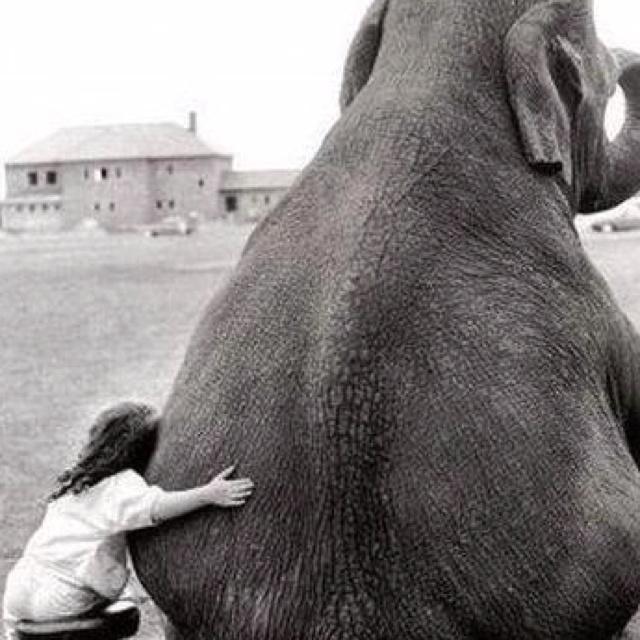 so cute!!: Little Girls, Sweet, Best Friends, Need A Hugs, Bestfriends, Pet, Water For Elephants, Baby Animal, Rolls Tide