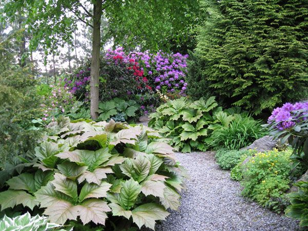 165 best images about shade gardens on pinterest for Shade garden designs zone 6
