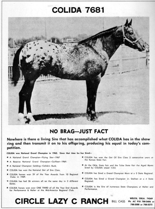 colidahuronad | Appaloosa | Appaloosa, Appaloosa horses, Horses