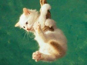 Gatto appeso