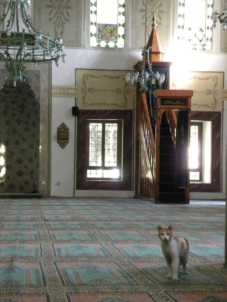 Cat in the mosque