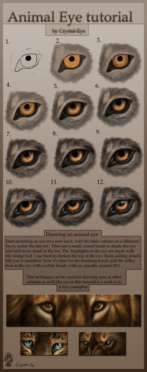 Best 25+ How to draw wolf ideas on Pinterest   How to draw ...