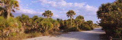 Trees Along a Dirt Road, Caspersen Beach, Venice, Sarasota County, Florida, USA Impressão fotográfica por Panoramic Images na AllPosters.com...