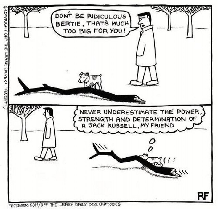 So like  Jack Russell!  Off The Leash (RupertFawcett)