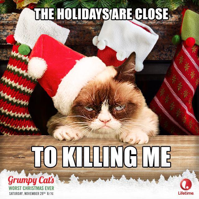 GrumpyCat- the holidays are close...to killing me.  Lifetime - Grumpy Cat Movie - Catvent