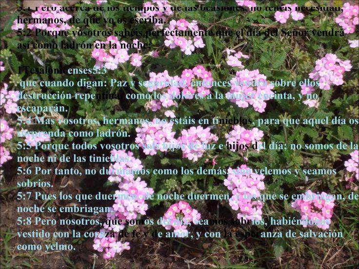 predica 1 tesalonicenses 4 13-18 Gabriela Millás Cristo nos viene a buscar, nos seguis?