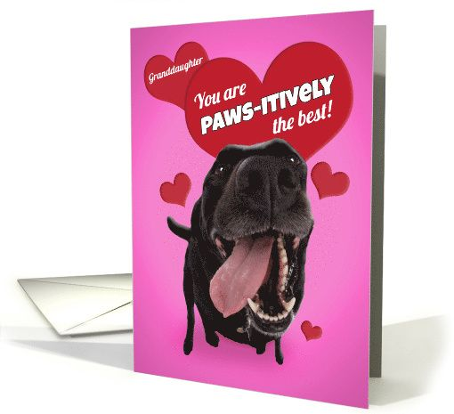 Happy Valentines Day Granddaughter Funny Dog Humor Card