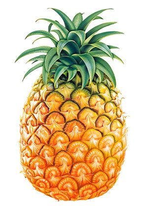 "October 16, 2015 pineapple Published by: Dr. Joshua Levitt  In 1957, a chemist working for Dole Pineapple Company stumbled upon a ""curious"" health finding about pineapples...  A finding that could change the way you deal with out-of-control inflammation, painful joint and muscle deterioration, and life-threatening illnesses like heart disease and autoimmune conditions."