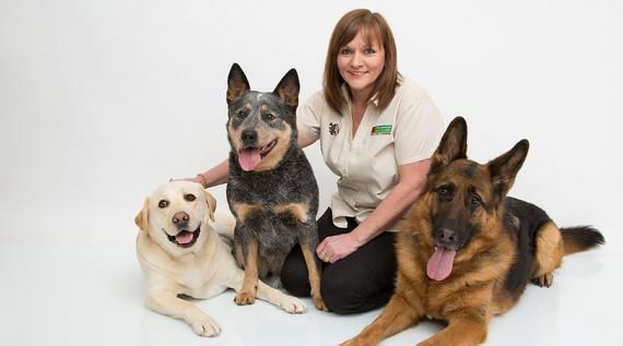 Bark Busters Home Dog Training Toowoomba Qld For Sale In 2019