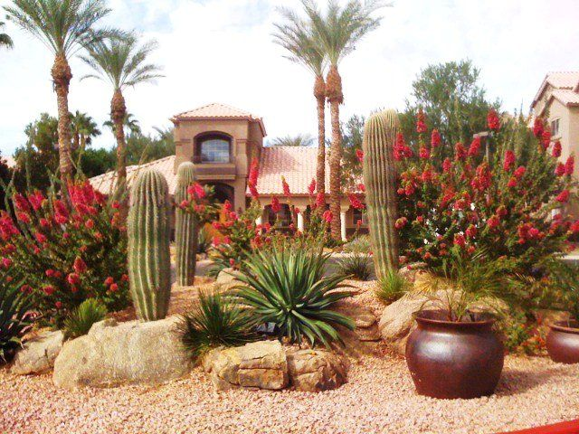 The 25 best Arizona landscaping ideas on Pinterest Desert