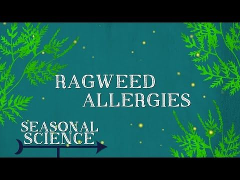 #Ragweed #Allergies & Symptoms – Fall Seasonal Science Video : While many of us love the beautiful colors associated with autumn, forthose who suffer from #fall seasonal allergies, it may not be the best of seasons. So what is the main culprit behind the itchy eyes and other unpleasant symptoms this time of year? It's […]