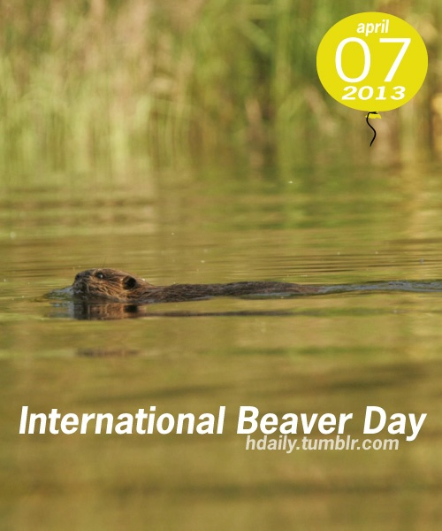 International Beaver Day!