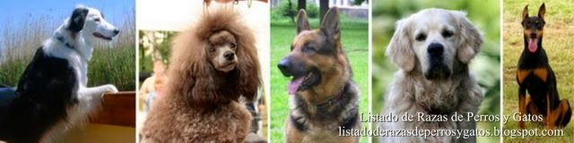 Listado de Razas de Perros y Gatos. Todos los tipos...: Inteligencia Canina. Stanley Coren