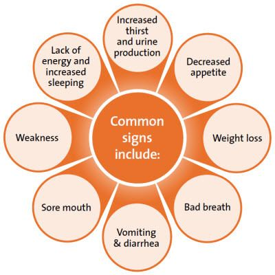 Signs and Symptoms of Kidney Disease #kidney #symptoms #signs #health #family #cure