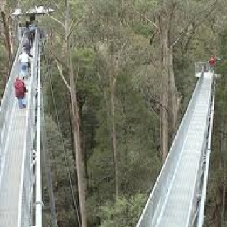 Hardy gully nature walk, dandenong ranges np, Victoria Australia