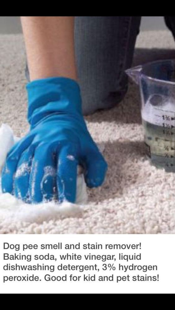 Dog pee stain and smell remover #DogTricks
