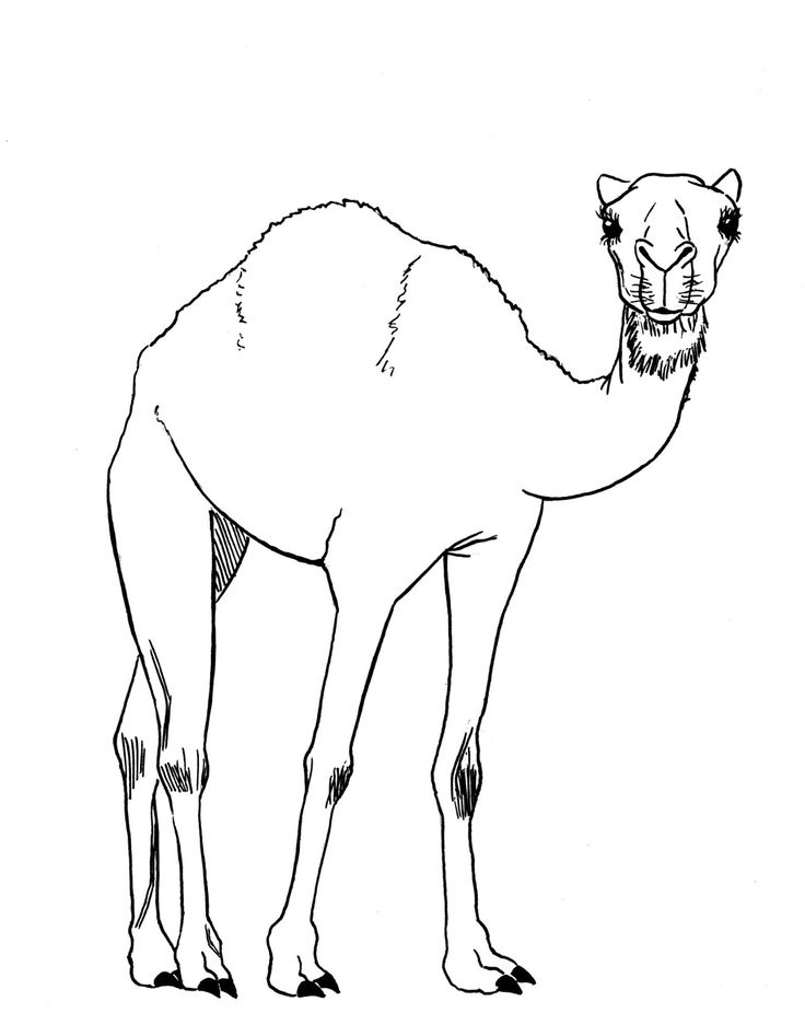 how to draw a camel step by step easy