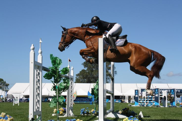 Vicki Wilson and Showtym Cadet Mvnz were the best of the four faulters, finishing sixth in the Norwood Gold Cup