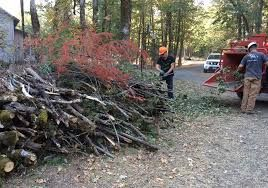 Limbs are a tremendous mess around my property. Avoid making mistakes like I have in the past and make sure you get only the best cordless chainsaw on the market.