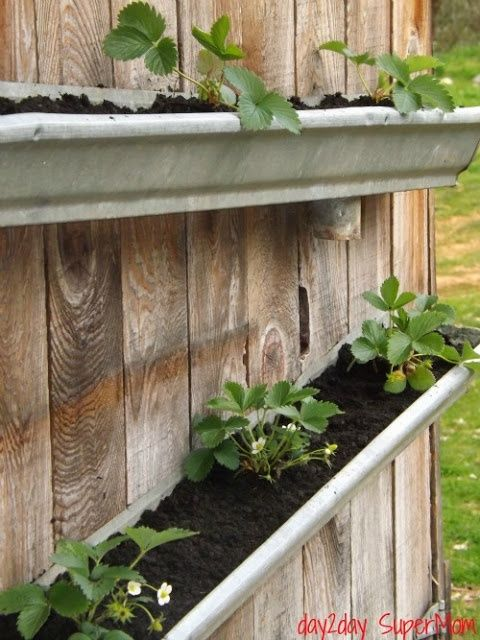Grow Your Own Gutter Strawberries @ its-a-green-life