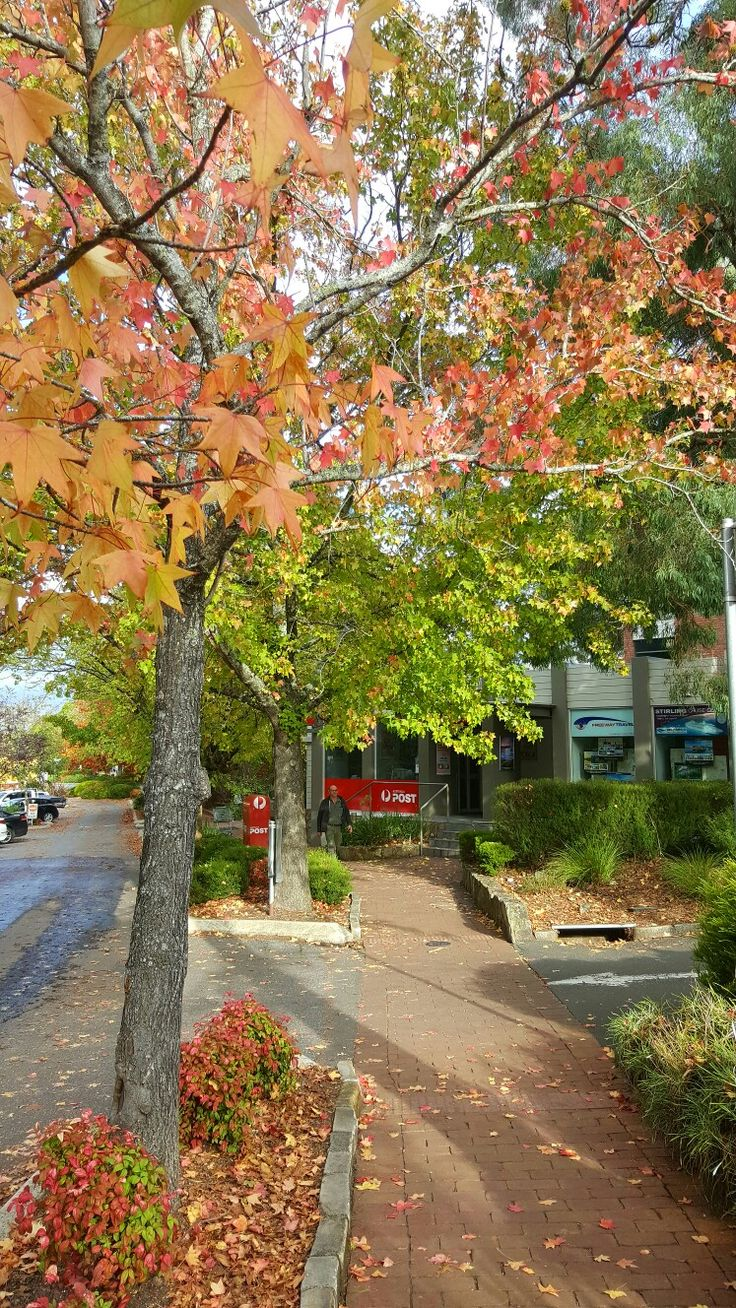 Autumn streetscape in Stirling- Adelaide Hills