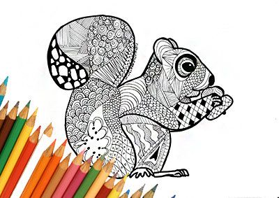 Squirrel coloring page, coloring squirrel, autumn coloring, fall coloring,squirrel design, printable page, download autumn, design for print