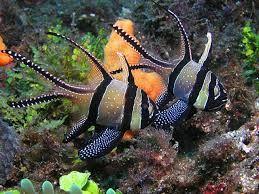 Resultado de imagen de komodo diving