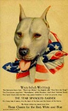 American Pit Bull Terrier - The pit bull Terrier is featured as a representative for the USA.  At one time ( pre world war 1 ) they were considered the best dog for families with children.