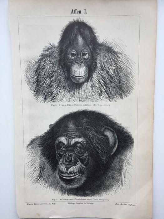 Online veilinghuis Catawiki: 20 gravures - Meyers Konversations-Lexikon  - 1880