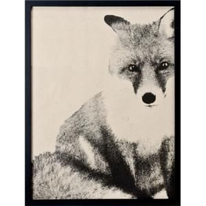 Lagerhaus AFFISCH FOX: Posters Foxes