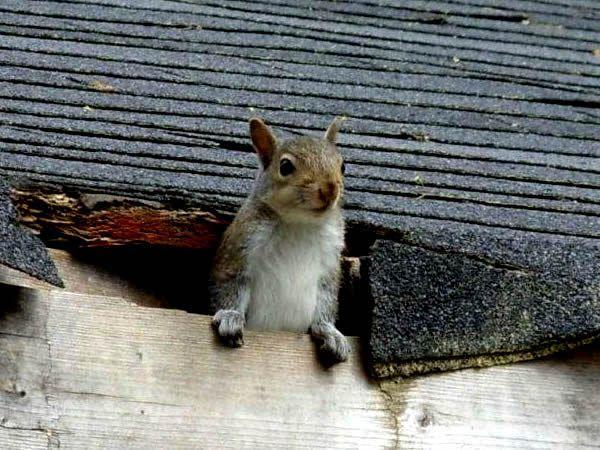 Squirrel On The Roof Squirrel Cute Squirrel Pretty Animals