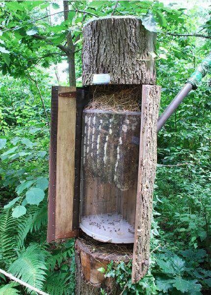 Ловушка,дуплянка для роя пчел из изогнутого плексигласа.