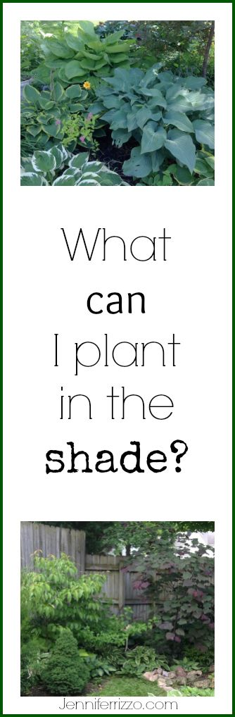 Great tips on what to plant in the shade