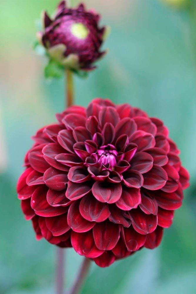 18 pictures of pretty flowers to boost your mood pinterest mightylinksfo