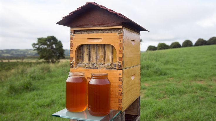 HOMENEWSThe Hive That Could Revolutionize Beekeeping For Beginners Dreaming of backyard bees to help save the dying population—but don't want to get stung? There's a tool for that.
