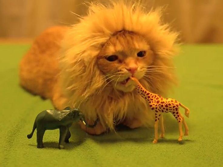 adorable chaton déguisé en lion qui mordille une girafe pour oublier le stress
