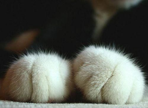 http://pixdaus.com/cat-toes-cat-paws-toes/items/view/52890/