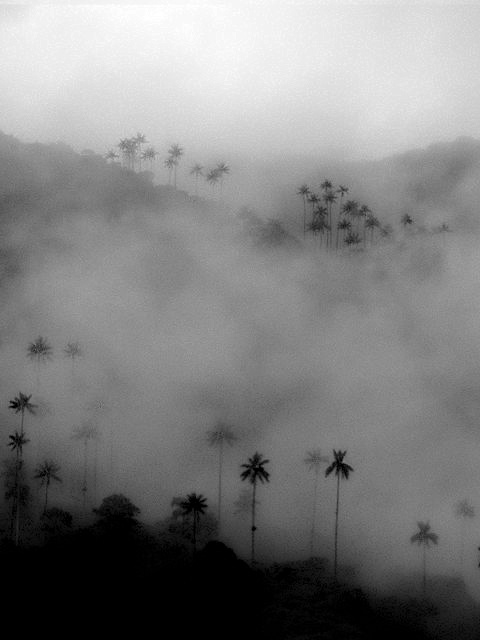 Bosque de niebla Colombia