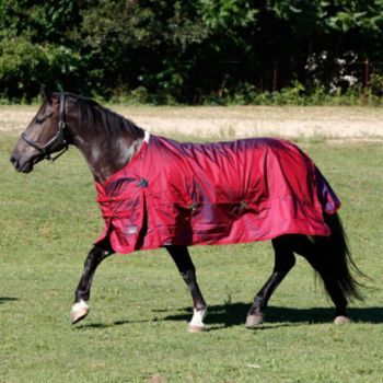 Shires Stormcheeta 2000D T/O Blanket 200g 84 Red: Shires StormCheeta 2000D Turnout Blanket 200g For… #Horse #Horses #Pets #Equestrian #Rider