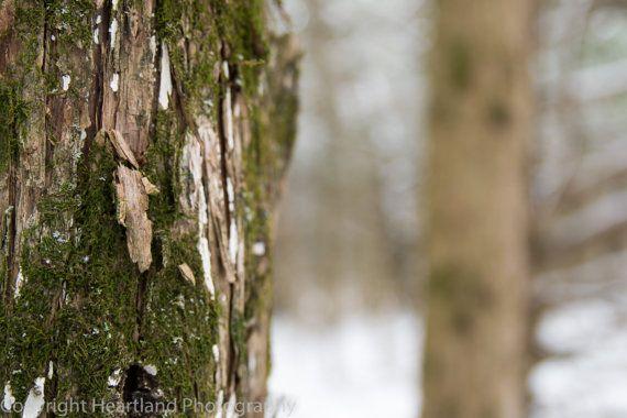 Green Moss on Oak Tree in Winter by HeartlandPhotoBySJW on Etsy