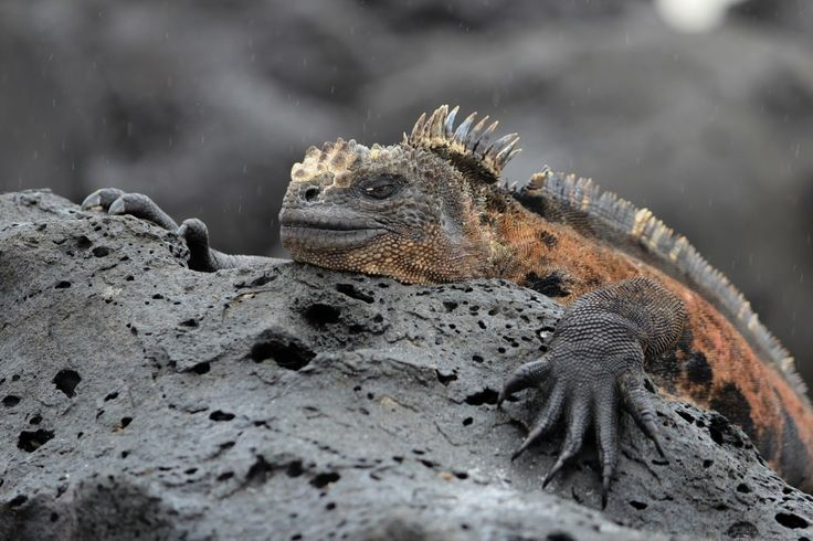 Na wystawie przyrodniczej w PAN Muzeum Ziemi w Warszawie zobaczymy cudowne zdjęcia przyrody