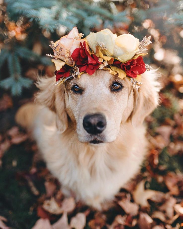 """Fran • Lizzie & Ally on Instagram: """"If you're looking for an autumn flower girl, Ally's your girl 🍂 Payment in treats and cuddles please …"""