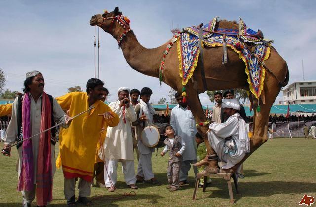 horse mela in pakistan - Google Search
