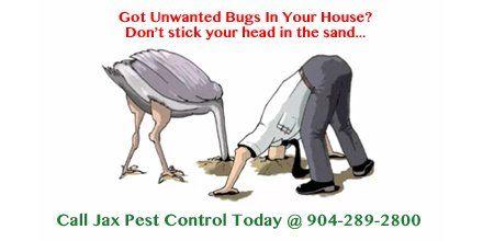 Call Jax Pest Control Today 904-289-2800 https://t.co/vhIBJmg1zg