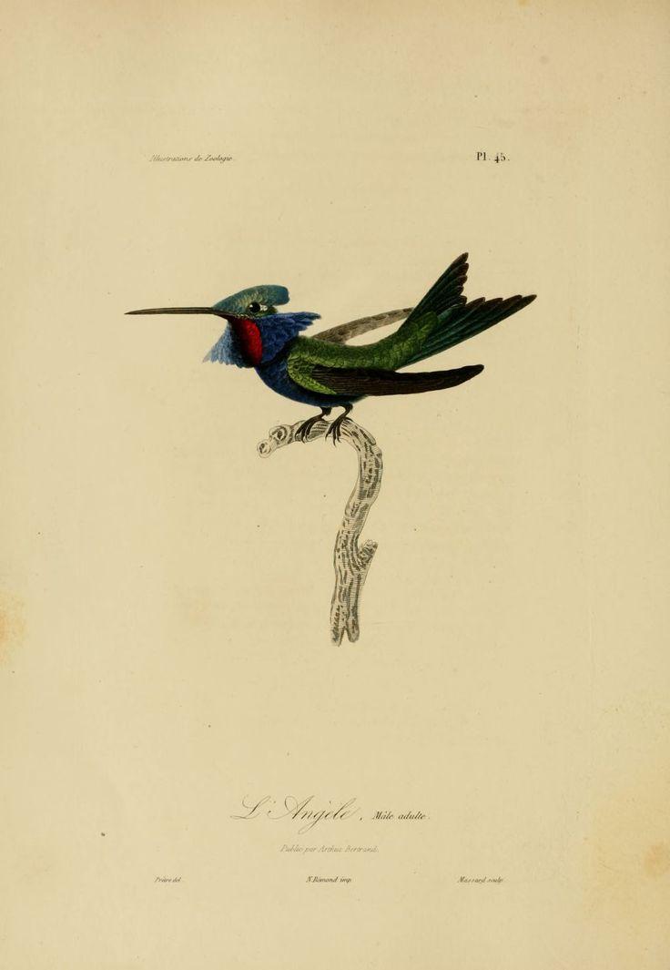 1000 images about dessin oiseaux on pinterest - Dessin de oiseau ...