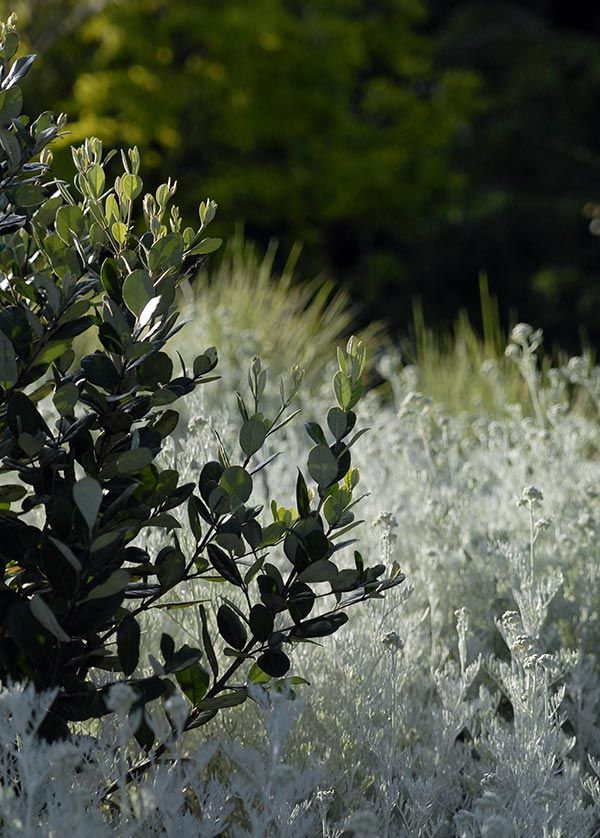 Matcham Garden