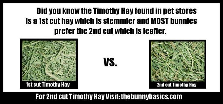 Timothy Hay for pet bunny rabbits. Did you know...