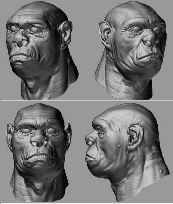 Homo Heidelbergensis | ... type specimens for homo heidelbergensis below the reconstructions