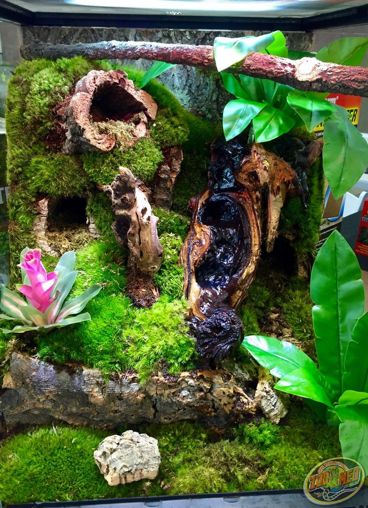 DIY this terrarium: Zoo Med cork flats can be used to create holding wall for substrate to build it higher, Zoo Med Frog Moss to cover substrate, Bird's Nest Fern fake fauna (or real plants of your choosing), cork rounds for decoration, and mopani wood with a waterfall cascading over it (Zoo Med Waterfall Kit can be used to create this).