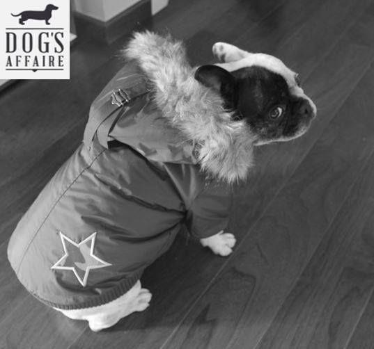 Chaqueta Army Barmy. www.dogsaffaire.com , la mejor selección de productos para perro. #moda para perro #complementos para perro #abrigo de perro